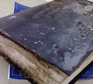 moho en los libros viejos